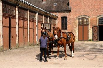 Normandie, pin du haras
